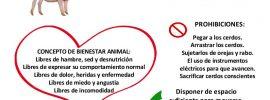 Protocolo Bienestar Animal Porcino Escámez