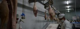 Etapa de despiece del cerdo. Proceso de elaboración de un jamón.